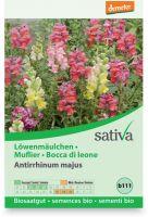 Bocca di leone - antirrhium majus Sativa